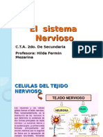 SISTEMA NERVIOSO 2DO. AÑO.ppt