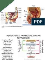 Hormon Reproduksi Manusia