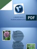 Grupo Reifs| PLANTAS BENEFICIOSAS