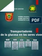 TRANPORTADORES DE GLUCOSA