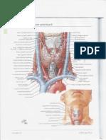 Atlas de Anatomie Generala