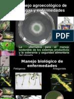 Manejo Agroecológico de InsectosPlagas y Enfermedades