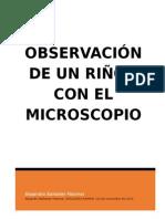 Observación de un riñón con el Microscopio