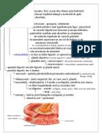 Digestia La Animale