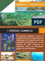 Cambrico y Ordovicico EXPOSICIÓN