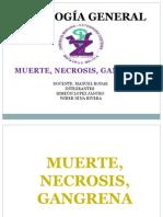 patologia.pptx