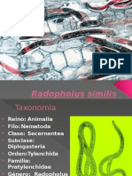 Ciclo de Radopholus similis fitopatologia