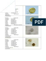 Classification of plankton