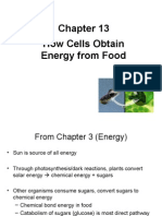10262015 Dr. Dono Chapter 13 - How Cells Obtain Energy