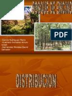 Bosques de Encino