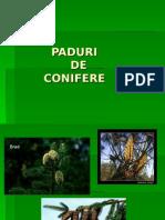 PADURI 3.