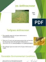 turf grass anthracnose