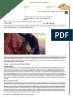 Hopper & Brosnan Nature Education Primate Cognition 2014