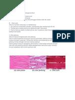 3 jaringan otot.docx