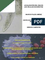 Localización DNA en Eucariotas