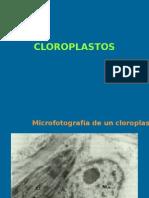 Clase 2 Cloroplastos y Fotosíntesis