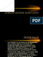 TESTICULO- I.ppt
