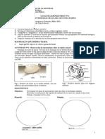 Guía Nº 6b Fonoaudiol Div.celular Parte 2