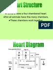 Cardiovascular Physiology.pps