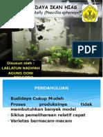 Pembenihan Ikan Black Molly