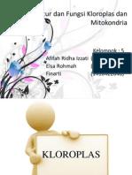 Kloroplas Dan Mitokondria