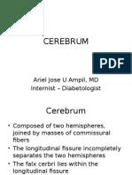 Sbcm Cerebrum