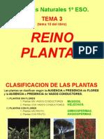Biología y Geología de 1º ESO; Tema 3:Reino Plantas