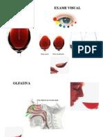 2auladevinhosoficial-12740544693085-phpapp01