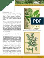Borraja.pdf
