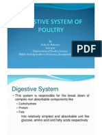 Digestive System of Poultry Avian Physiology