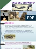 Filogenia y Ontogenia Del Elefante