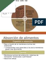 Bioquimica Digestivo II Part.