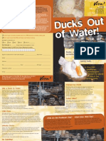 Ducks Out of Water (VIVA USA)