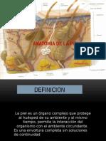 anatomiayfisiologiadelapiel-