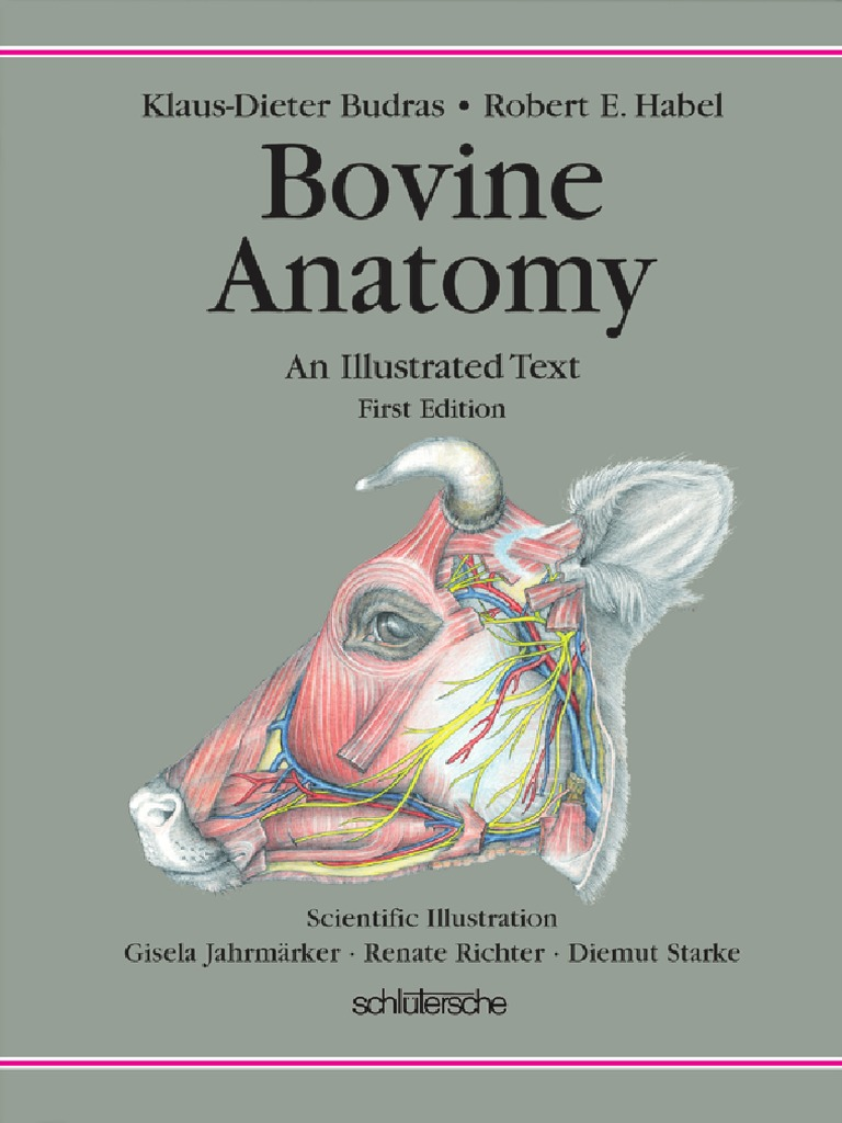 Bovine Anatomy | Arm | Anatomical Terms Of Location