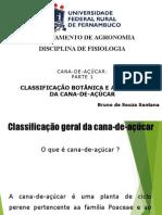 Cana-de-açúcar CLASSIFICAÇÃO BOTÂNICA E ANATOMIA DA CANA-DE-AÇÚCAR