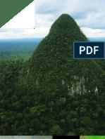 Inventario biológico rápido de Sierra del Divisor