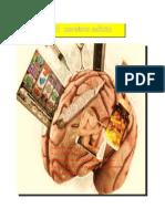 El Cerebro Adicto
