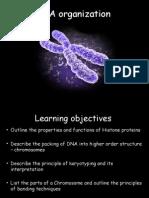 Organization of DNA