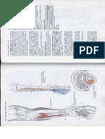 Anatómia I. - Könyv -128