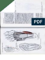 Anatómia I. - Könyv -134
