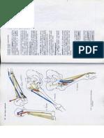 Anatómia I. - Könyv -121