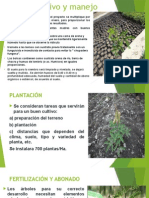 Cultivo y manejo.pptx