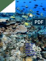 coral-reef-1213046911574815-8