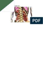 Makalah Penyakit Crohn Disease
