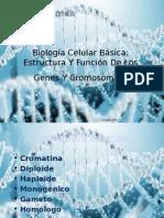 Genetica Biologia Celular Básica 2