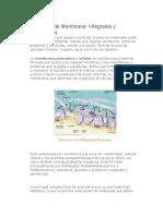 Proteínas de Membrana