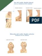 músculos inferiores y superiores del cuerpo humano