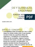 Clase Epitelios y Glandulas Exocrinas21