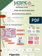 Histopatologia